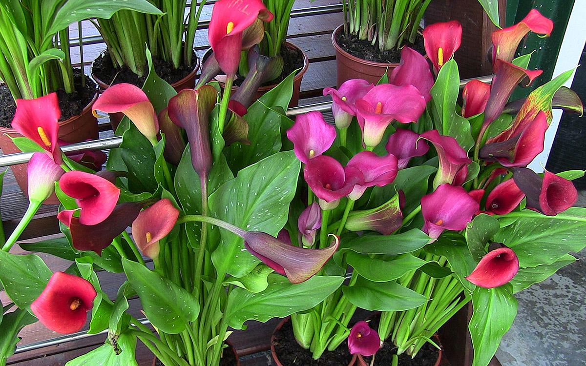 Flor 10