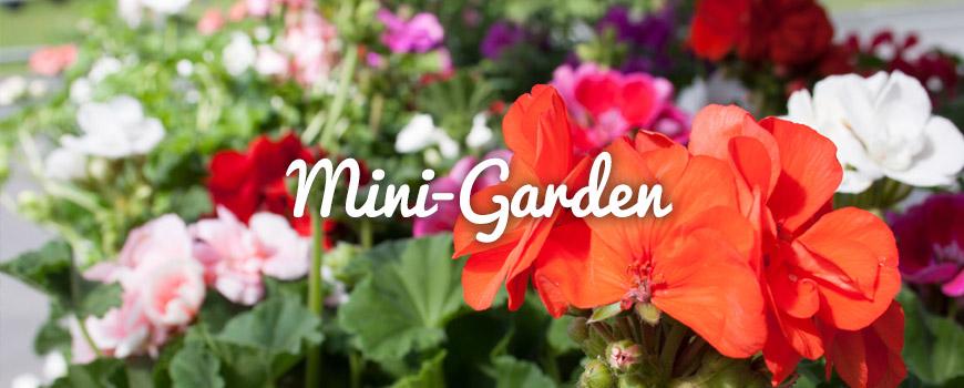 header-mini-garden