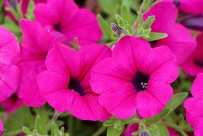 Tus flores disfrutan del verano